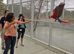 ~ scarlet macaw flight training